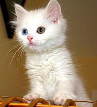 vans med katter