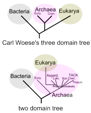 Domain (biology) - Image: Two domain tree