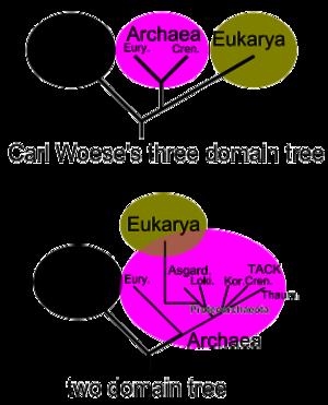 Domain (biology)