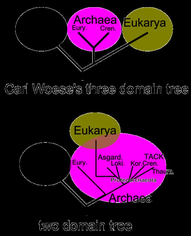 Domäne Biologie Wikiwand