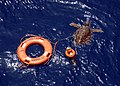 US Navy 050626-N-6616W-003 A sea turtle tangled in a life ring was rescued by crewmembers stationed aboard the amphibious transport ship USS Nashville (LPD 13).jpg