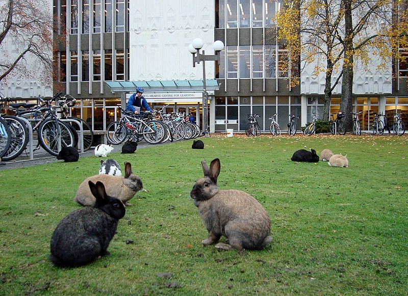 File:UVic rabbits.jpg