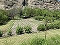 Un potager à Embrun depuis le chemin sous le Roc (mai 2021).jpg