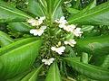 Unidentified Plants from Kerala 2016-01-27.JPG