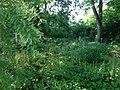 Upper Arlington, Ohio (27630764822).jpg