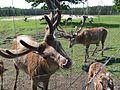 Valgundes pagasts, LV-3017, Latvia - panoramio.jpg