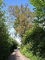 Vicarage Road - geograph.org.uk - 790222.jpg