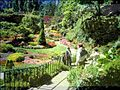 View of the sunken gardens at Butchart Gardens.jpg