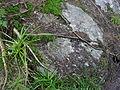 Vylet k Cernemu jezeru Sumava - 9.srpna 2010 97.JPG