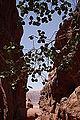 Wadi Rum - Jordanie 07-2012 (7631248218).jpg