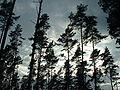 Wald Himmel.jpg