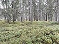Waldboden.sept.2017.jpg