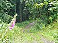 Wanderweg - panoramio (7).jpg