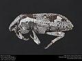Weevil of Ethiopia (40501480362).jpg