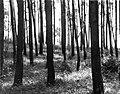 Werner Haberkorn - Árvores 2.jpg