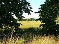 Wheat field near Avebury Manor - geograph.org.uk - 885302.jpg