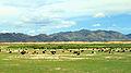 Widoki mongolskiego krajobrazu widziane z minibusa Karakorum - Ułan Bator (03).jpg