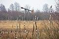 Wietingsmoor bei Freistatt (LK Diepholz) IMG 4078.jpg