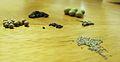 Wikibooks planting-seeds.jpg