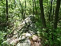 Wildcat Ridge trail - panoramio.jpg