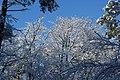 Winter (5473162603).jpg