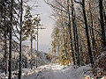 Winter im Teutoburger Wald05.jpg