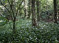 Woodland1 (5653223165).jpg