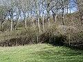 Woodland corner, Chase Woods - geograph.org.uk - 1221099.jpg