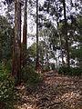 Woods on Bushara Island - Lake Bunyonyi - Southeastern Uganda.jpg