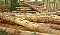 Woodstacks, Donard forest - geograph.org.uk - 1016675.jpg