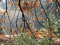 Yosemite Light (3021470996).jpg