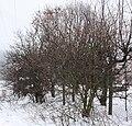 Zima 2010 01 10 0283.jpg
