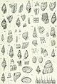 Zoologische Jahrbücher (1905) (14781001902).jpg