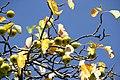 Zweige eines Wildapfelbaums im September II.jpg