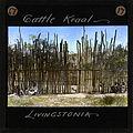 """Cattle Kraal, Livingstonia"" Malawi, ca.1895 (imp-cswc-GB-237-CSWC47-LS3-1-017).jpg"