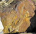 """Liesegang banded"" sandstone (Vinton Member, Logan Formation, Lower Mississippian; Hanover Pit, Licking County, Ohio, USA) 1 (47477144942).jpg"