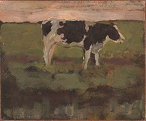 Black and White Heifer