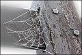 'Spinnenweb-01.jpg