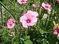 Çiçek 2.JPG