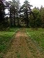 Μονοπάτι μέσα στο δάσος του Ξηρολιβάδου.jpg