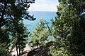 Χαλκιδική, Σιθωνία, Ελιά - panoramio (9).jpg