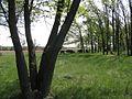 Дендрологічний парк 190.jpg