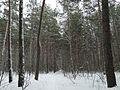 Зимний лес - panoramio (15).jpg