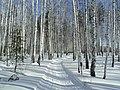 Зимняя дорога в лесопарке.jpg