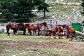 Лошади на Ай-Петри.JPG