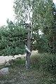 Любовь деревьев Под Солигорском - panoramio.jpg
