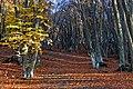 Ліс на яйлі Чатирдага.JPG