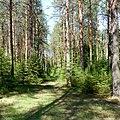 Окрестности деревни Чертеж - panoramio.jpg