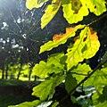 Парк Коломенское 11.jpg