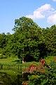 Парк Мала Софіївка, Лука-Мелешківська P1400424.jpg